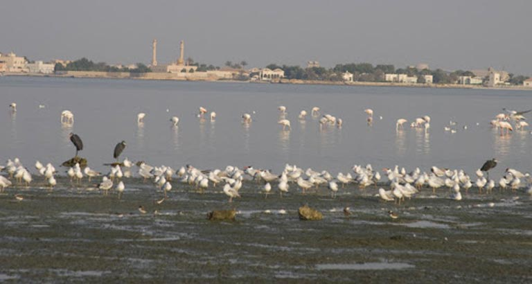 Tubli Bay to be Revamped to Meet Environmental Standards and Requirements