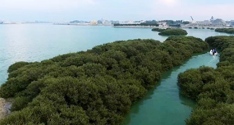 Bahrain goes green as seedlings planted in tubli mangroves